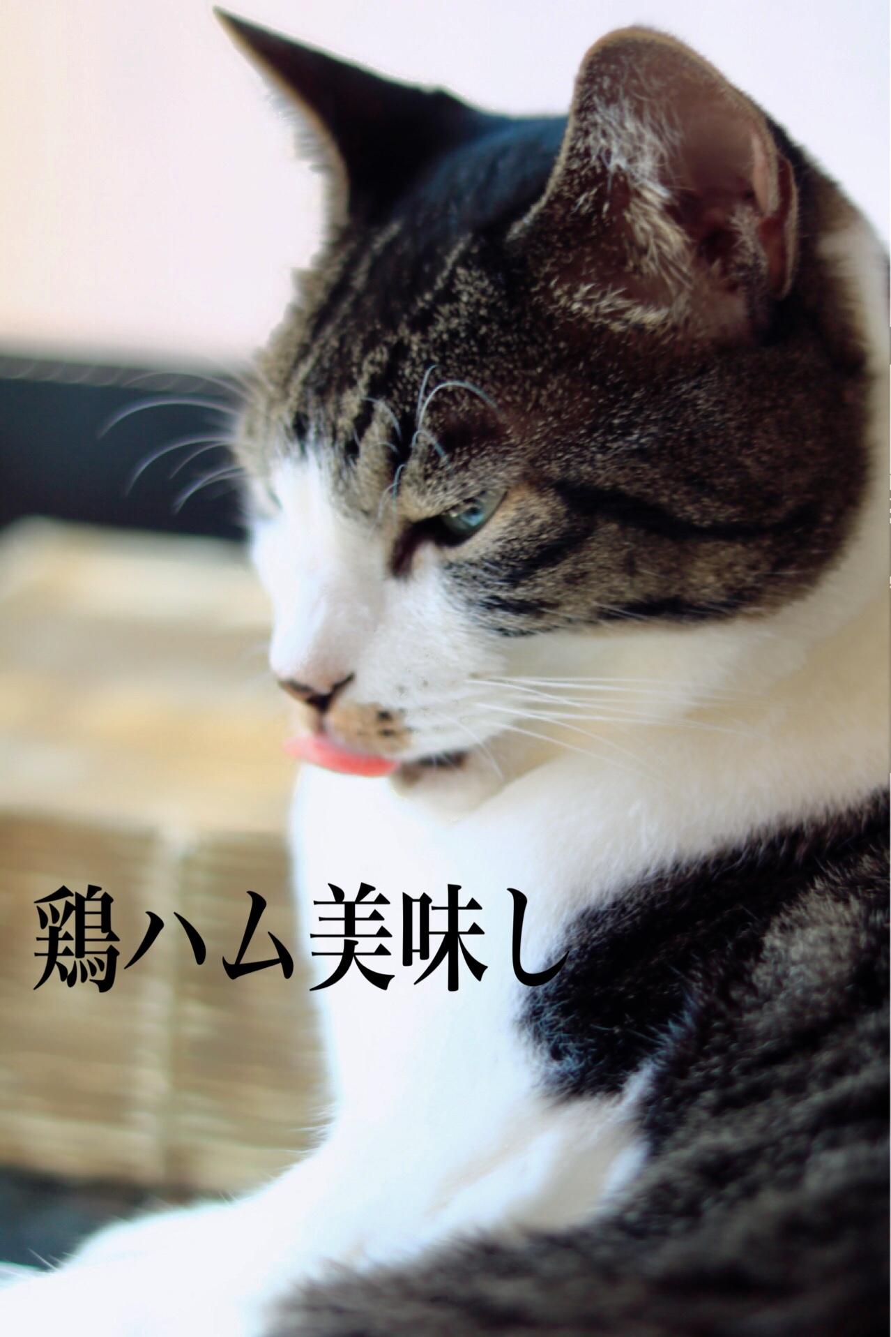 にゃんこ劇場「秋の俳句!」_c0366722_20563398.jpeg