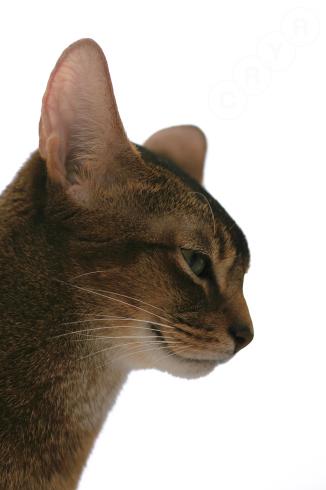 [猫的]ホワイトシリーズ?_e0090124_21380540.jpg
