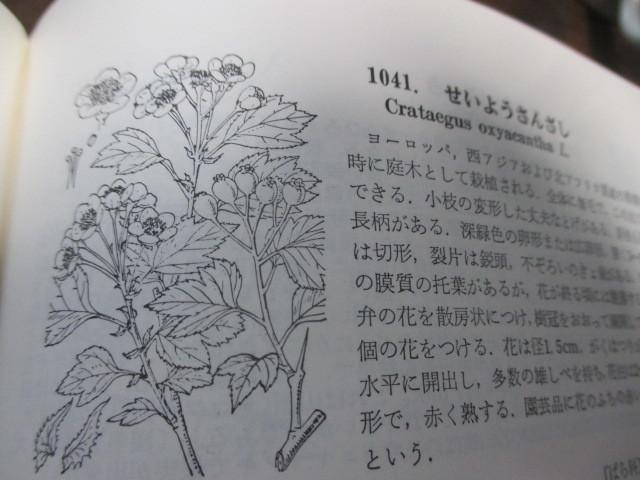 f0166824_19530704.jpg