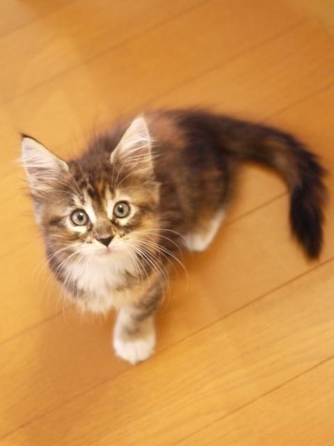 猫のお留守番 Aoi(あおい)ちゃん編。_a0143140_21574209.jpg