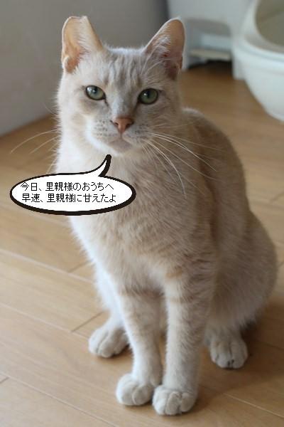 保護猫さんお届けしました_e0151545_18432738.jpg