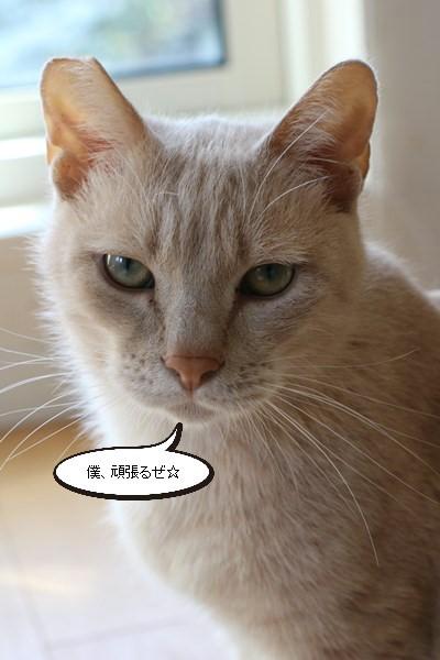 保護猫さんお届けしました_e0151545_18433894.jpg