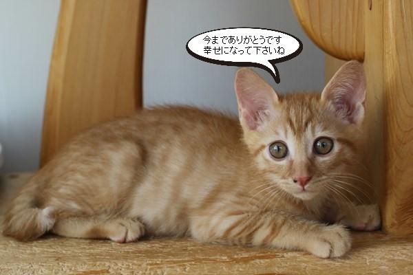 保護猫さんお届けしました_e0151545_18441094.jpg