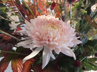 オークリーフ花の教室(甘艸さんと大草さんの作品)_f0049672_17351921.jpg