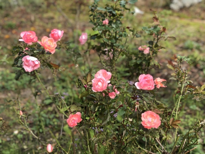 秋の米山ガーデン_d0182179_22074482.jpg