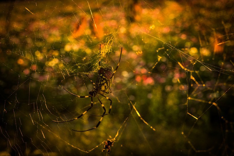 A Farm In October Evening Light_d0353489_19515274.jpg