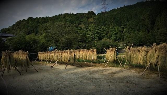 北摂の10月末の家庭菜園~♬_f0229190_15260851.jpg