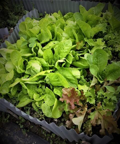 北摂の10月末の家庭菜園~♬_f0229190_15382149.jpg