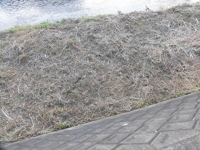 「冬が来る前に」 津田・荒田島の有志と小潤井川の草刈り清掃_f0141310_07263491.jpg