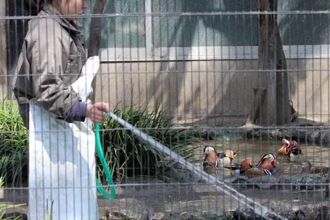井の頭自然文化園~分園の鳥たちと水生物館の生物たち_b0355317_21390929.jpg