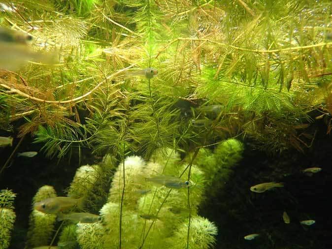 井の頭自然文化園~分園の鳥たちと水生物館の生物たち_b0355317_22144048.jpg