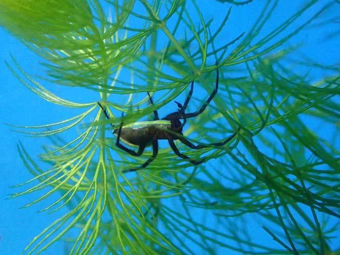 井の頭自然文化園~分園の鳥たちと水生物館の生物たち_b0355317_22213688.jpg