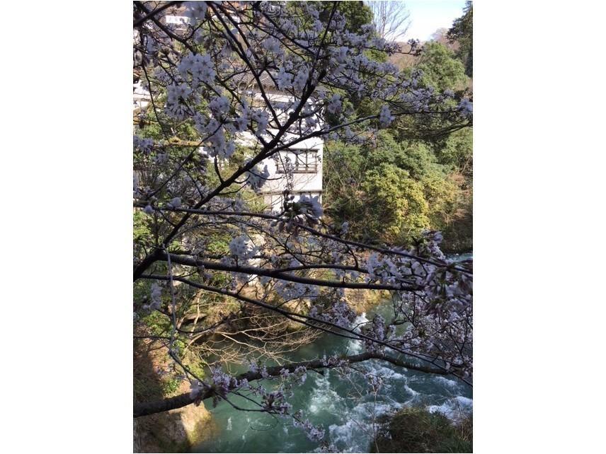 桜 咲きました。_c0210517_11324322.jpg