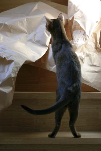 [猫的]邪魔者_e0090124_20432895.jpg