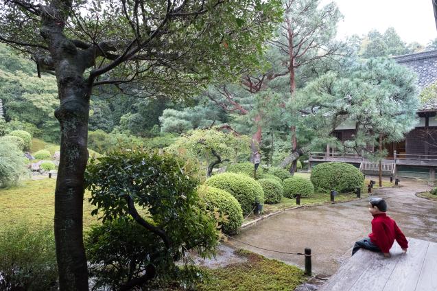 雨の青蓮院_e0369736_09291392.jpg