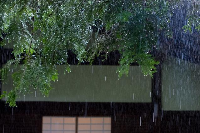 雨の青蓮院_e0369736_09293521.jpg