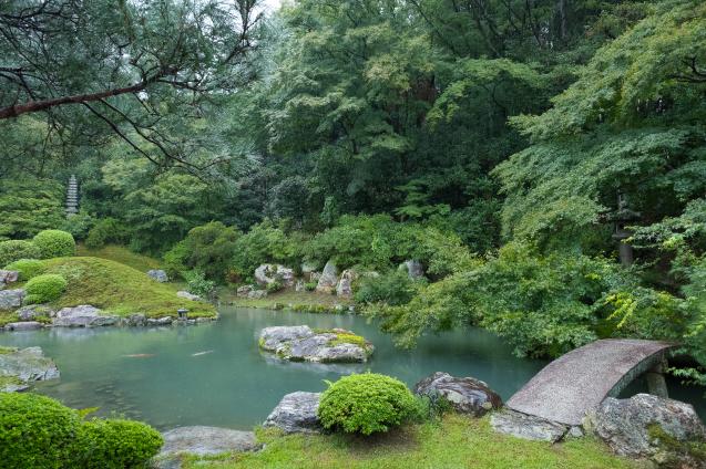 雨の青蓮院_e0369736_09301400.jpg