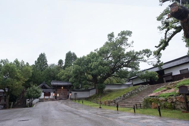 雨の青蓮院_e0369736_09321432.jpg