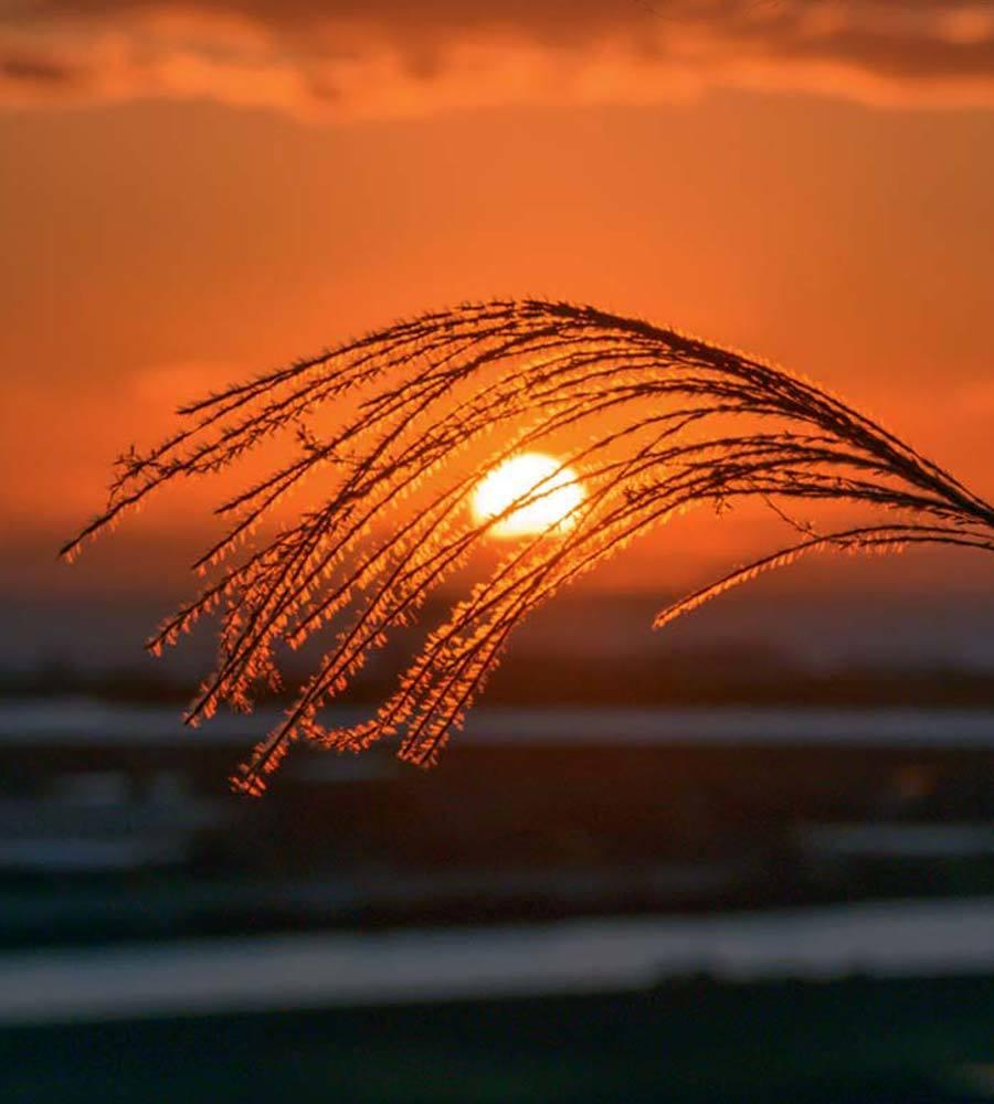 夕景 回想⑳)夕暮れの河内港周辺=熊本県熊本市_d0238245_15494531.jpg