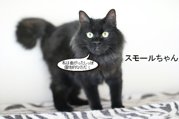 黒猫さんが2匹いると_e0151545_19350724.jpg