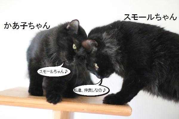 黒猫さんが2匹いると_e0151545_19352804.jpg