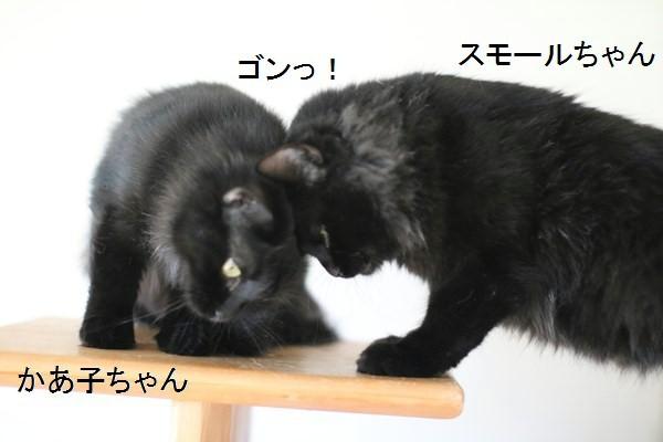 黒猫さんが2匹いると_e0151545_19354771.jpg