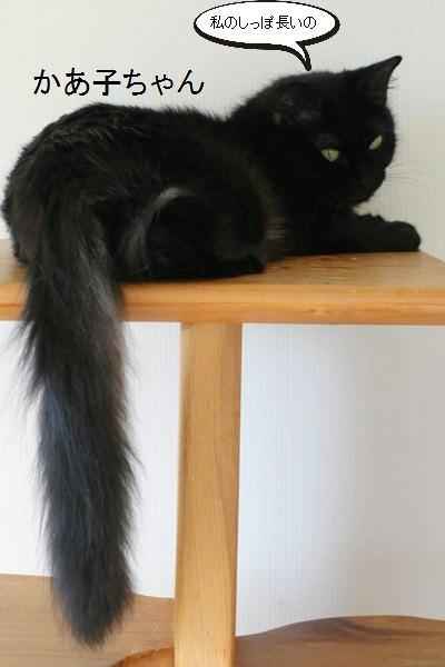 黒猫さんが2匹いると_e0151545_19363038.jpg