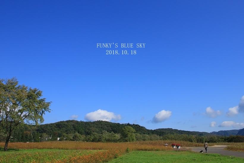 秋のお花畑・Ⅰ_c0145250_10113796.jpg