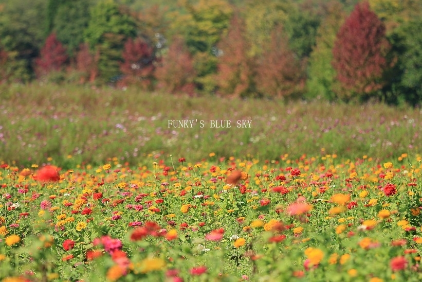 秋のお花畑・Ⅰ_c0145250_10120381.jpg