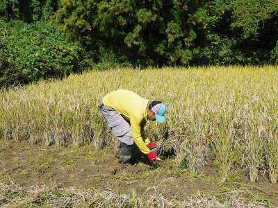 米作りへの挑戦!稲刈りの様子!手刈り&掛け干しなんです!その2(稲刈り終了しました!)_a0254656_16564793.jpg