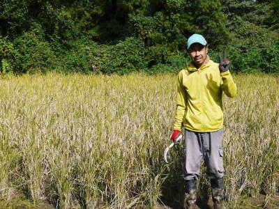 米作りへの挑戦!稲刈りの様子!手刈り&掛け干しなんです!その2(稲刈り終了しました!)_a0254656_16580614.jpg