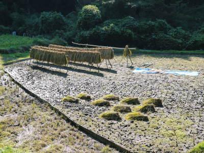 米作りへの挑戦!稲刈りの様子!手刈り&掛け干しなんです!その2(稲刈り終了しました!)_a0254656_17020858.jpg