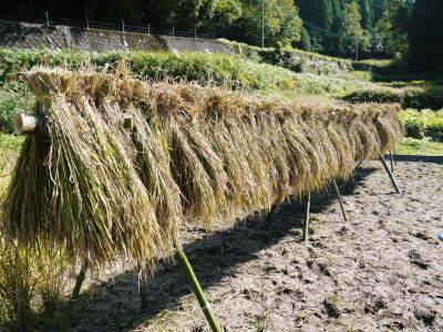 米作りへの挑戦!稲刈りの様子!手刈り&掛け干しなんです!その2(稲刈り終了しました!)_a0254656_17084208.jpg