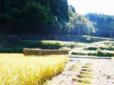 米作りへの挑戦!稲刈りの様子!手刈り&掛け干しなんです!その2(稲刈り終了しました!)_a0254656_17145424.jpg