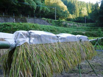 米作りへの挑戦!稲刈りの様子!手刈り&掛け干しなんです!その2(稲刈り終了しました!)_a0254656_17533265.jpg