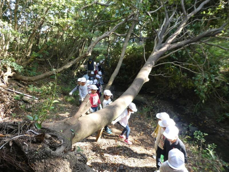 淡輪小学校1年生遠足「うみべの森散策」_c0108460_15135428.jpg