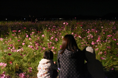 コスモス祭り『夜祭』_d0101562_17413101.jpg