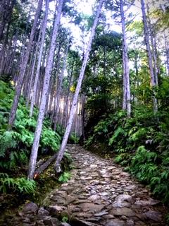 熊野古道_b0139785_19342323.jpg