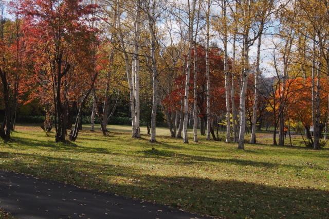 南区の公園で_c0360399_21541457.jpg