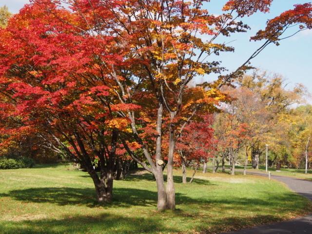 南区の公園で_c0360399_21583340.jpg