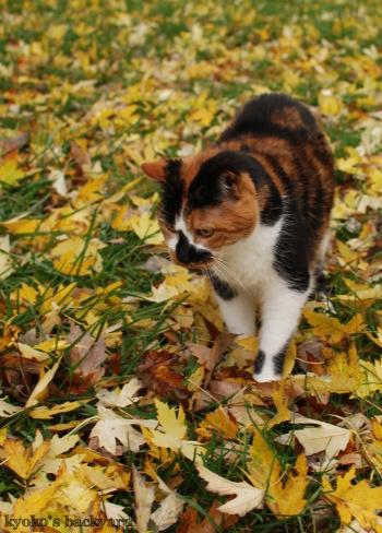 落ち葉の季節(Whitneyを探せ?!)_b0253205_07233399.jpg