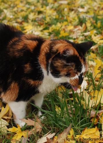 落ち葉の季節(Whitneyを探せ?!)_b0253205_07235546.jpg