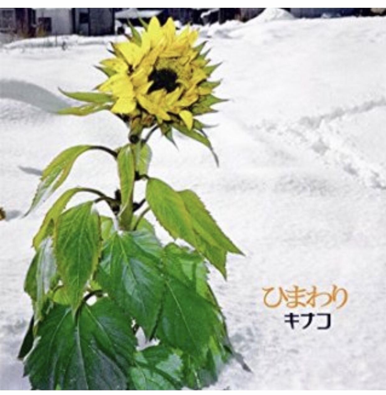 キナコ40代突入 (*≧∀≦*)!_f0115311_23240983.jpeg