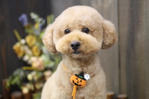 10月23日ご来店のワンちゃんです!!_b0130018_13534866.jpg