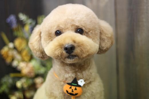 10月23日ご来店のワンちゃんです!!_b0130018_13541140.jpg