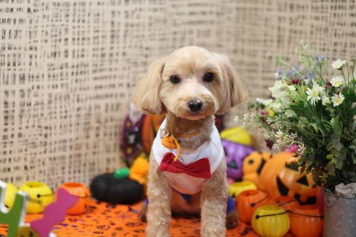 10月23日ご来店のワンちゃんです!!_b0130018_18302200.jpg