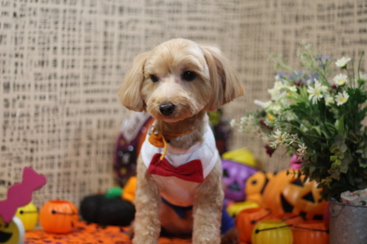10月23日ご来店のワンちゃんです!!_b0130018_18310663.jpg