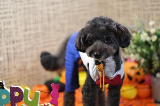 10月23日ご来店のワンちゃんです!!_b0130018_18321590.jpg