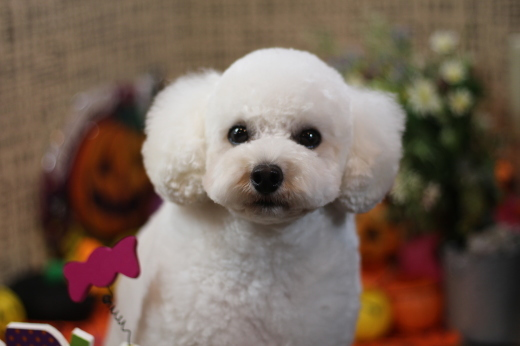 10月24日ご来店のワンちゃんです!!_b0130018_22421061.jpg