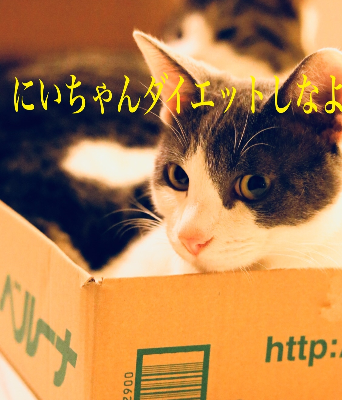 にゃんこ劇場「ギュウギュウ詰め」_c0366722_10205841.jpeg